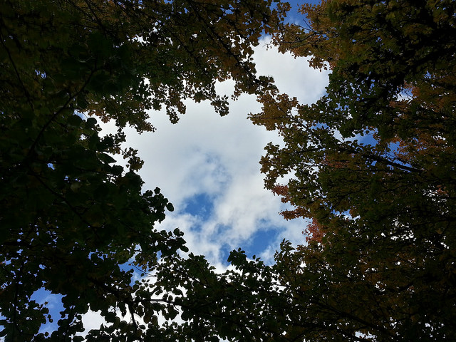 A view of clouds against a blue sky as seen looking upwards from a stand of trees.